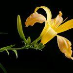 Apricot-Swirls-2