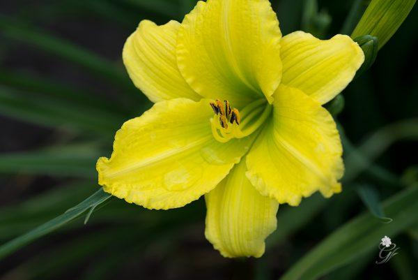 Green-Flutter-2