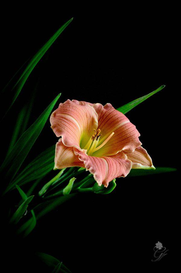 roseemily